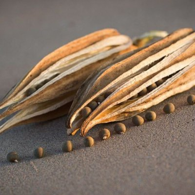 Addicted In Coffee? This Alternative Ancient Herb Will Excite You