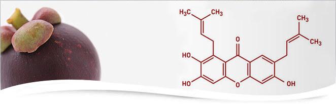 xanthone_molecular