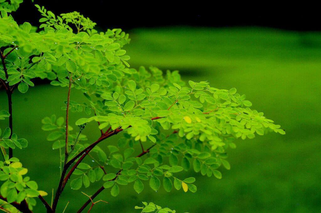 Le saviez-vous?  Les immenses avantages du «légume miracle» pour notre santé